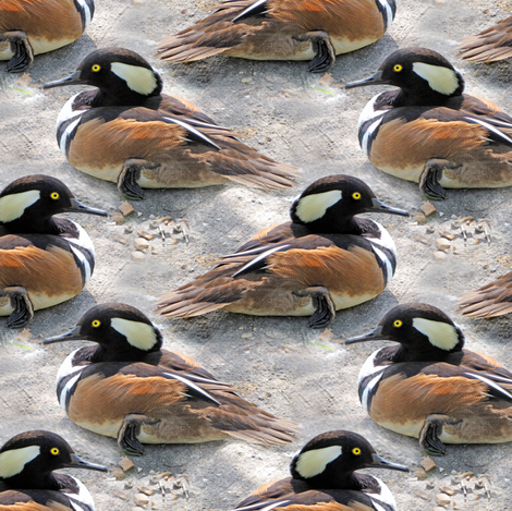 Hooded Merganser duck fabric by eclectic_house on Spoonflower - custom fabric