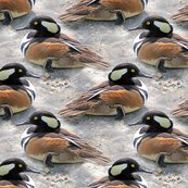 Rrhooded_merganser_duck_1793_shop_thumb