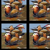 Rmandarin_duck_black_border_shop_thumb
