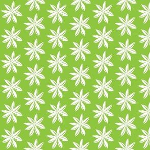 Romulea pale green white