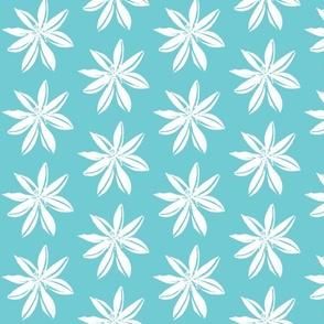 Romulea  white on light blue