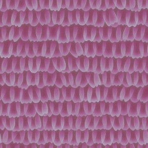 butterfly scales - rose