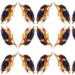 The Kingfisher Kaleidoscope