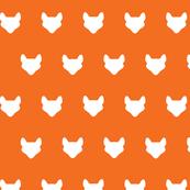 foxes white on orange