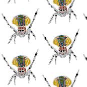 Rainbow Spider - Giant