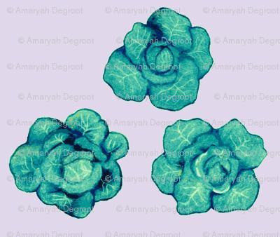 cabbages on violet