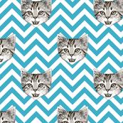 le chaton - light blue chevron