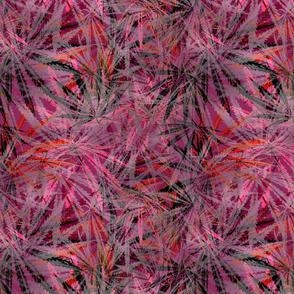 Lacy Leaf Magenta Ganja