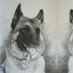 Charcoal German Shepherd