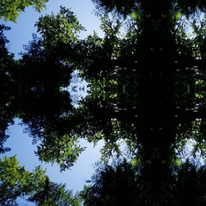 Treetops in Tualatin Nature Park