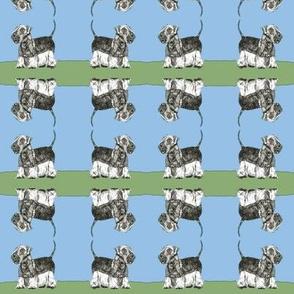 Cesky Terrier - Stand in Grass Light Sky