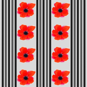 Poppy Patch 2
