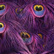 Rrtale_of_the_peacock_tail___scintilating_sunset___peacoquette_designs___copyright_2014_shop_thumb