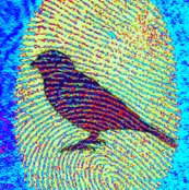 Rrrfingerprint_bird_5_shop_thumb