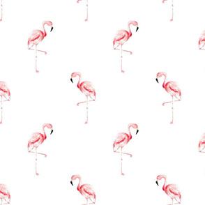 flamingos_2