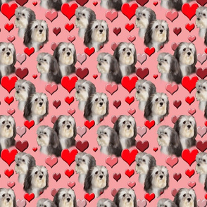 seamless_havanese_and_hearts