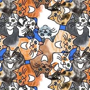 Cat Cuddle
