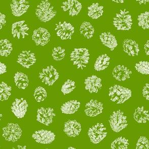 pine cones on leaf green