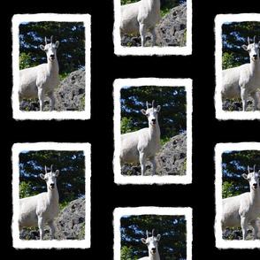 Ewe on a Cliff Panel
