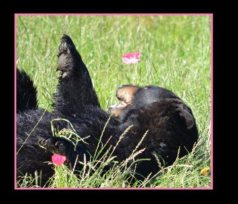 Bear & Poppies in Grass - Border