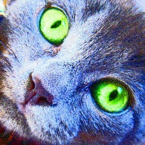Green Eyes Kitty Cat
