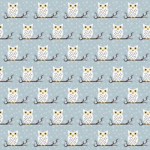 little owls - winter