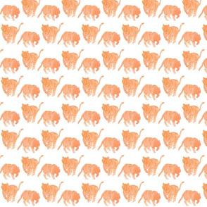 tigers roaming