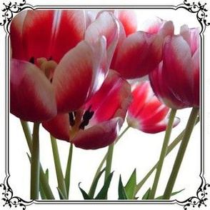 framed tulips - large main