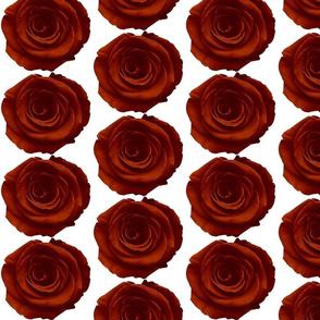 Dark_red_rose