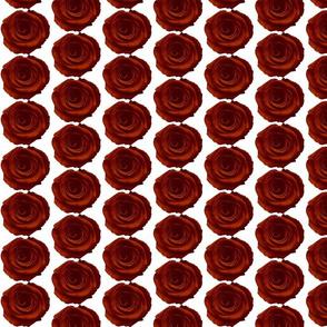 Small Dark_red_rose