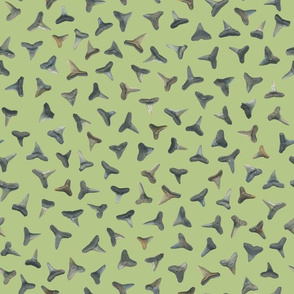 shark teeth on pale green