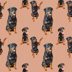 Rottweiler (Orange/Rust)