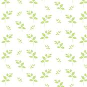 Leaves of Green-kiwi