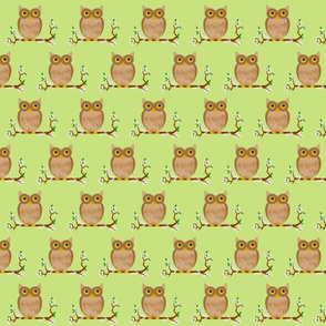 little owls - spring