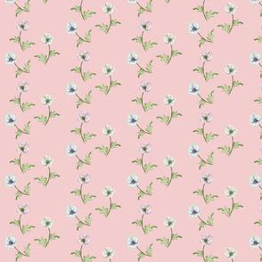 Poppy Pastels on Pink