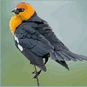 Colourful West Coast Bird