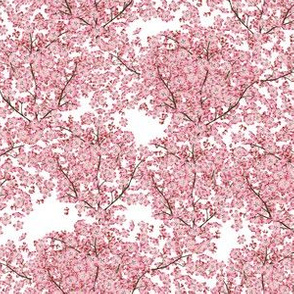 Tiny Cherry Blossoms - Pink