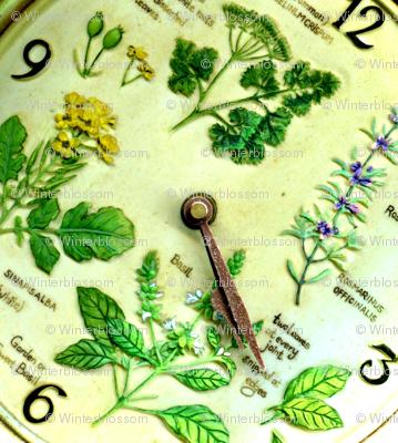 Springtime - Time to grow some herbs