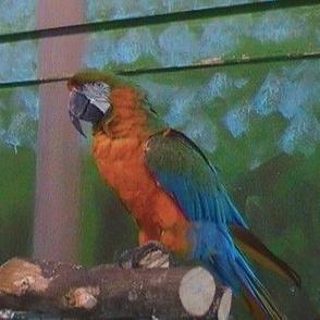 Preety Parrot