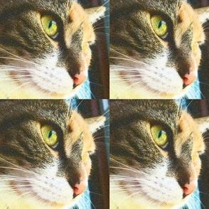 Calico Kitty Cat