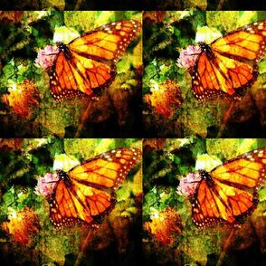 monarch grunge