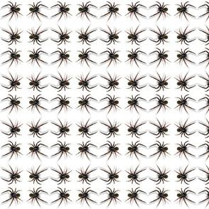 3D_SPIDER