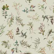 Eucalyptus foliage collection on  Beige  d9d8c6