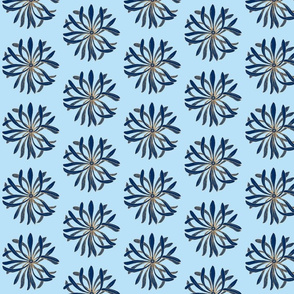 Chrysanthemum dark blue on light blue