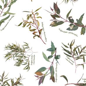 Eucalyptus foliage collection on white for Fabric