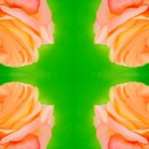Pink Rose on green