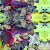 Rfallleaves_shop_thumb