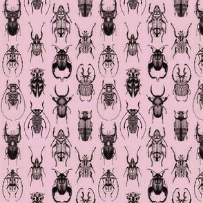 Pencil Beetles Pink