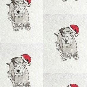 Cesky Santa