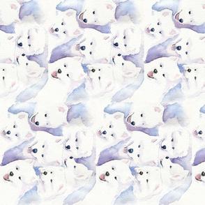 Sammy_Pups